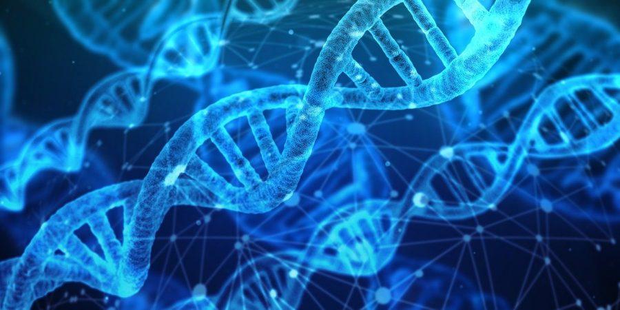 O genoma faz parte do nosso DNA, ele é um conjunto que dentro existem 27 mil genes, e todos os nossos pares de cromossomos, que funcionam como se fossem todas as informações da nossa genética.